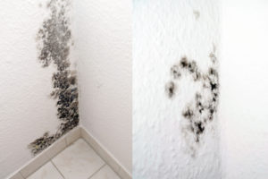 How to Identify Mold Versus Mildew