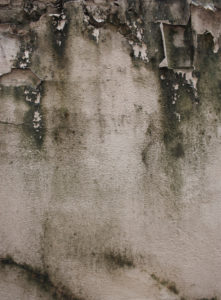Look for Early Signs of Mold