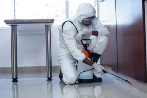 Proper Treatment of Mold Can Minimize Illness Caused by Exposure